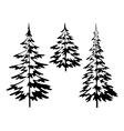 Christmas fir tree contours vector image
