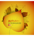 Autumn abstract floral background vector image