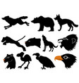 predators of wildlife vector image