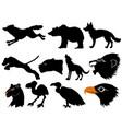 predators of wildlife vector image
