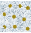 Camomile seamless vector image vector image