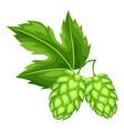 Green hops with leaf for oktoberfest vector image