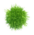 Ball green grass vector image