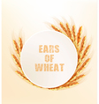 Nature background with ears of wheat vector image vector image