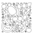 fruit set in flat linear design style vector image