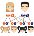 Gender dependency from chromosomes vector image