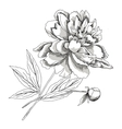 PeonySketch black and white vector image