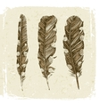 Hand drawn dotted feathers in vintage style vector image vector image