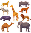 Africa animal decorative set vector image