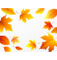 autumn falling leaves on transparent checkered vector image