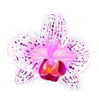 beautiful orchid phalaenopsis purple and white vector image