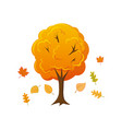 cartoon style autumn tree with leaves falling down vector image