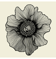 poppy flower vector image