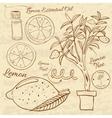 Hand drawn of a lemon set Web vector image