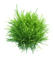 fresh green grass ball vector image