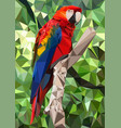 ara parrot low poly vector image vector image