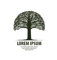 Tree logo Silhouette of oak icon Nature ecology vector image