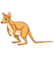 Wallaby vector image vector image