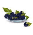 Background with blackberry vector image vector image
