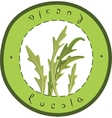 Fresh Rucola vector image
