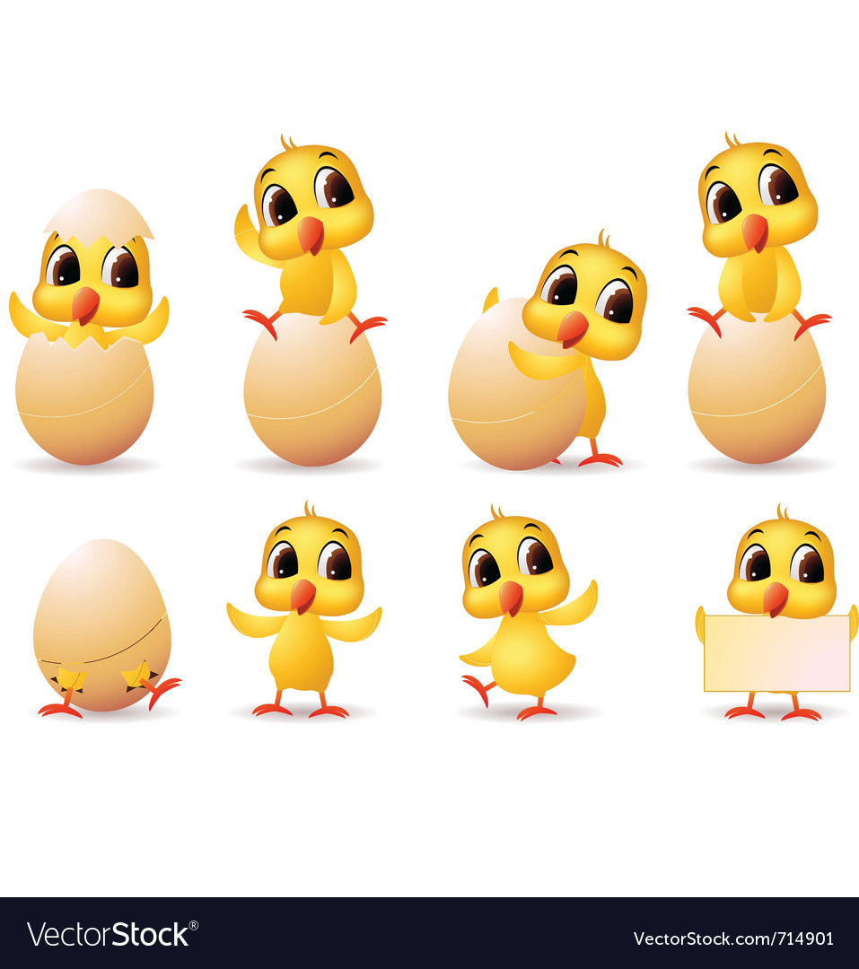 Little chicken vector
