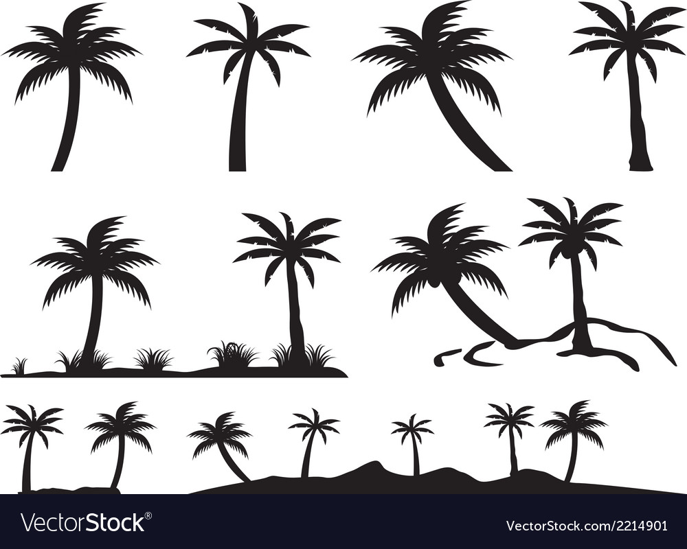Palm trees and islands vector