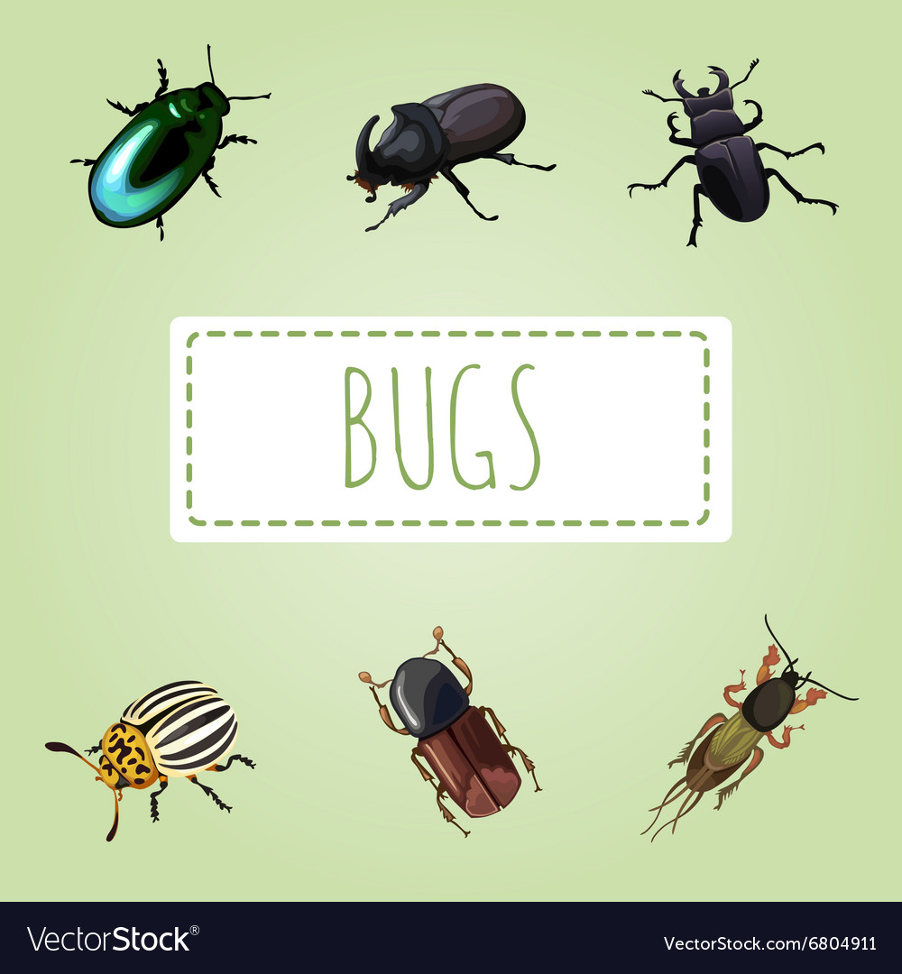 Set of various beetles six image vector