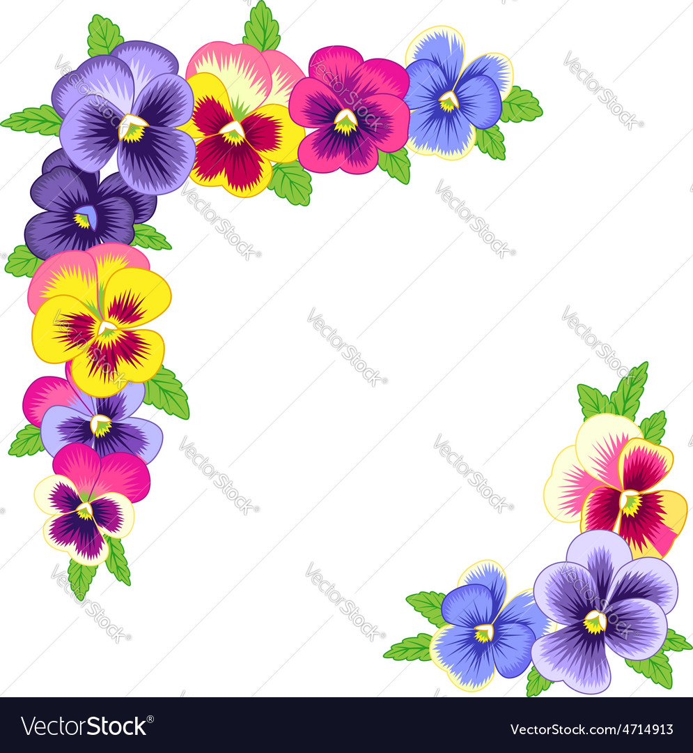 Pansy corners vector