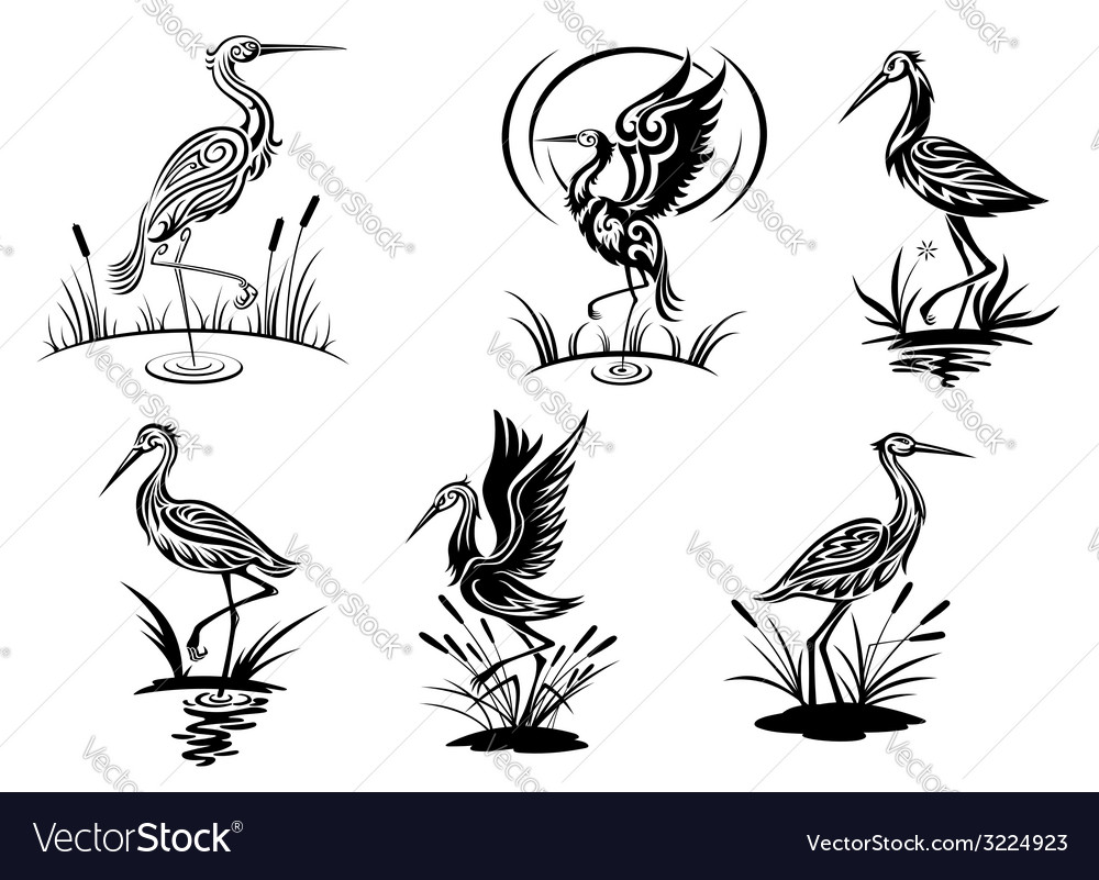 Stork heron crane and egret birds vector
