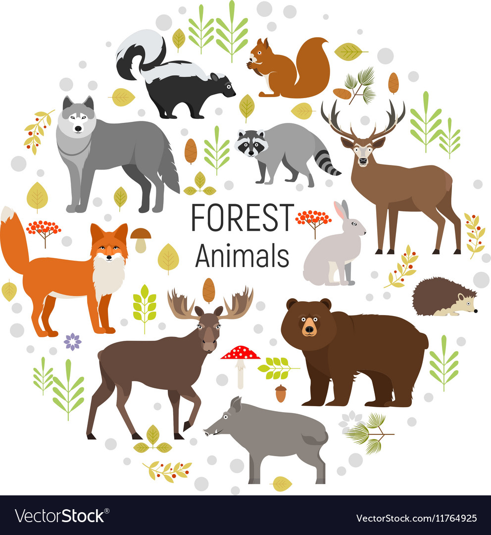 Circle set of plants and forest animals vector