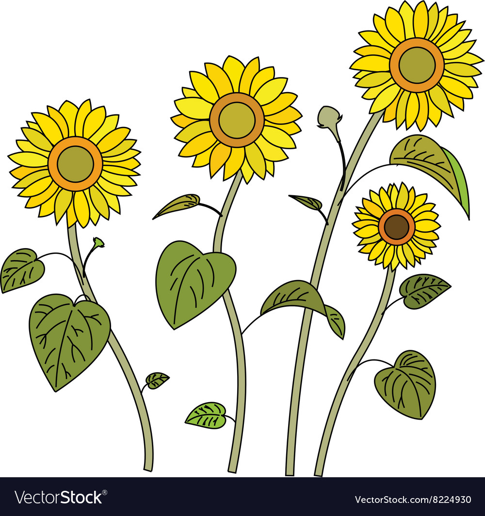 Sunflowers380x400 vector