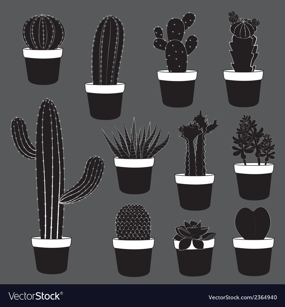 Cactus and desert plants collection vector