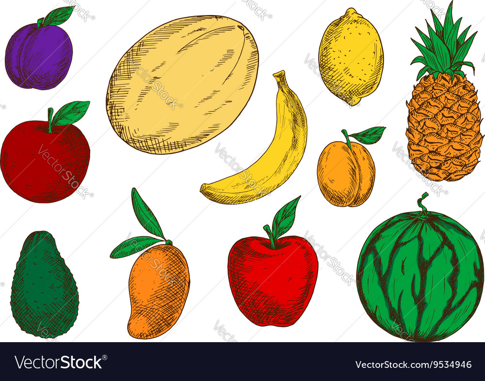 Healthy and fresh fruits colored sketch icons vector