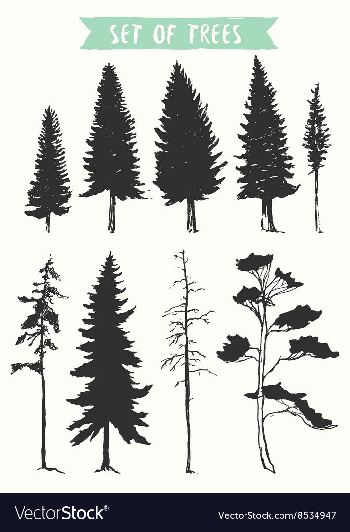 Hand drawn silhouette pine and fir trees vector