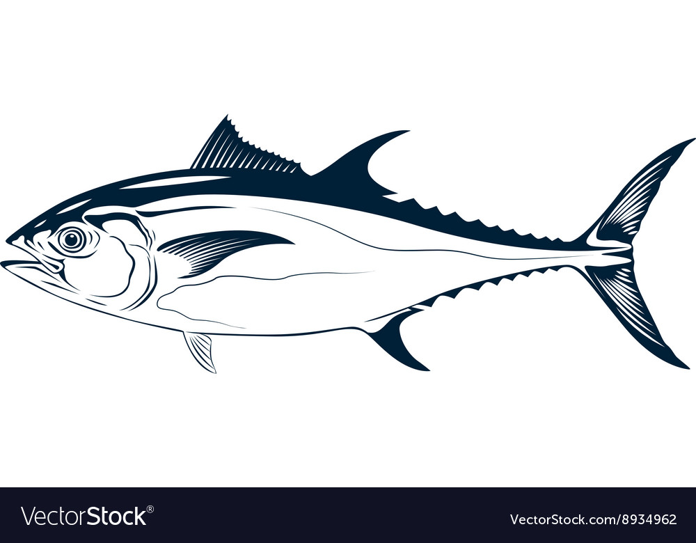 Graphic tuna vector