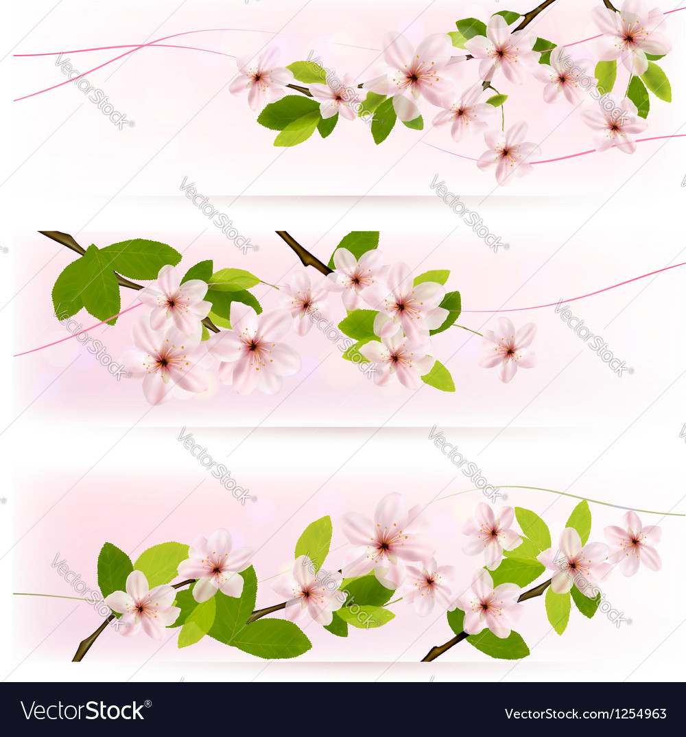 Three spring pink borders with pink blossom vector