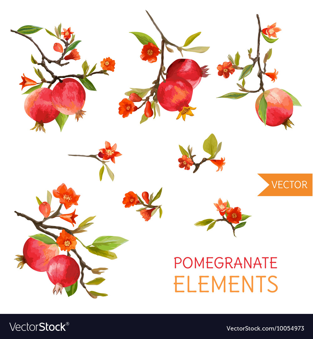 Vintage pomegranates flowers and leaves watercolor vector