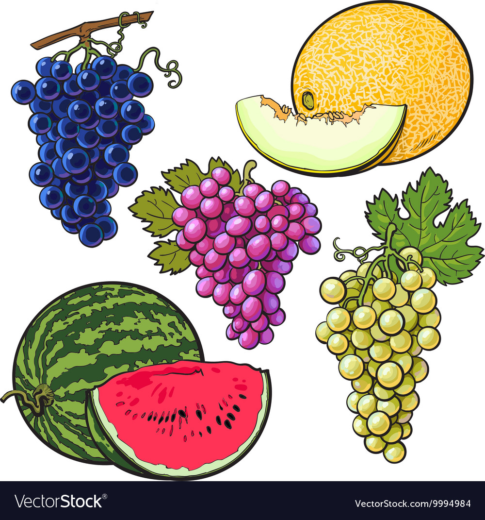 Collection of red green purple grapes melon and vector