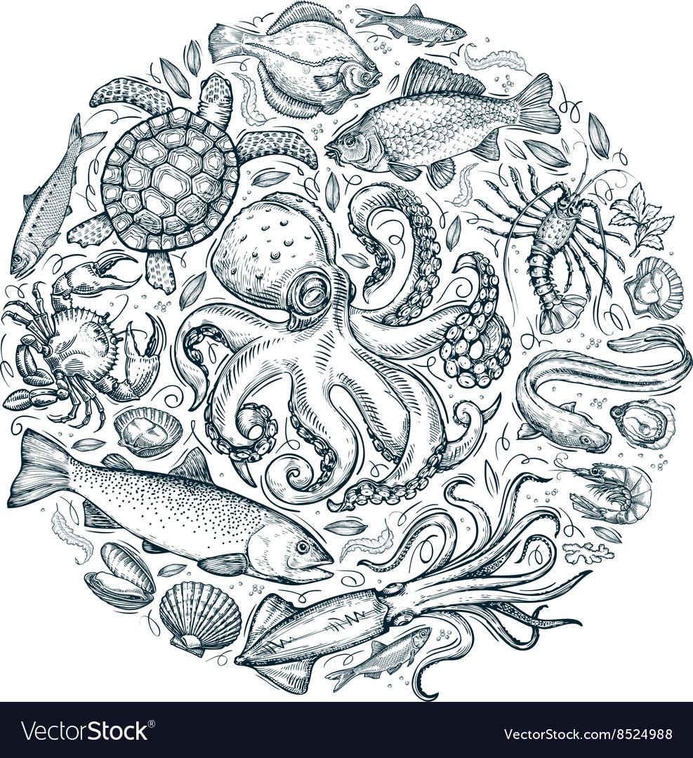 Marine animals or seafood hand drawn sketches vector