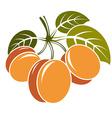 Harvesting symbol fruits isolated Three ripe vector image