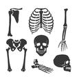 Human skeleton black set vector image
