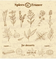 Spice in French cuisine Herbs used in France for vector image