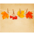 autumn background with colorful autumn leaves vector image