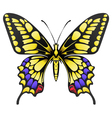 big yellow machaon butterfly isolated on white vector image