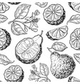 bergamot seamless pattern drawing isolated vector image