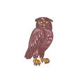 Owl Observing Looking Drawing vector image vector image