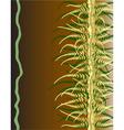 vine ferns vector image vector image