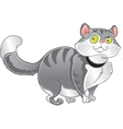 Grey fat cat vector image vector image