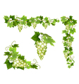 Set of bunches of grapes vector image