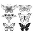 set of art butterflies vector image